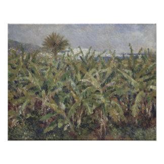 Campo de los árboles de plátano de Pierre-Auguste Impresión Fotográfica