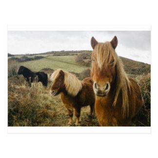 Campo de los caballos de los potros del caballo tarjetas postales