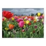 Campo de los tulipanes tarjeta de felicitación
