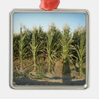 Campo de maíz ornamentos para reyes magos