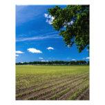 Campo de maíz en el sol membrete