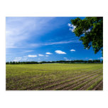 Campo de maíz en el sol postal
