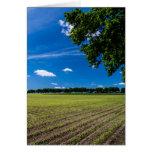 Campo de maíz en el sol tarjetón