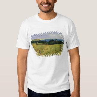 Campo de maíz en la isla del Wight Poleras
