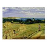Campo de maíz en la isla del Wight Postales