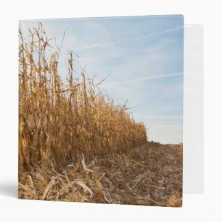 Campo de maíz en parte cosechado