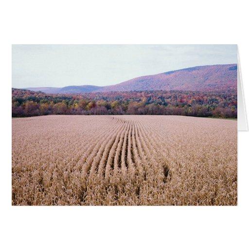 Campo de maíz/follaje tarjeton