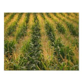 """Campo de maíz invitación 4.25"""" x 5.5"""""""