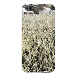 Campo de maíz iPhone 5 carcasas