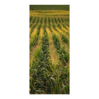 Campo de maíz lona