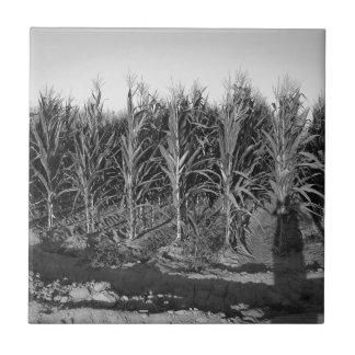 Campo de maíz negro y blanco azulejos