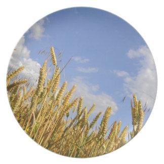 Campo de maíz platos