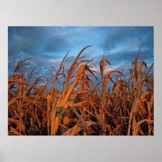 Campo de maíz póster