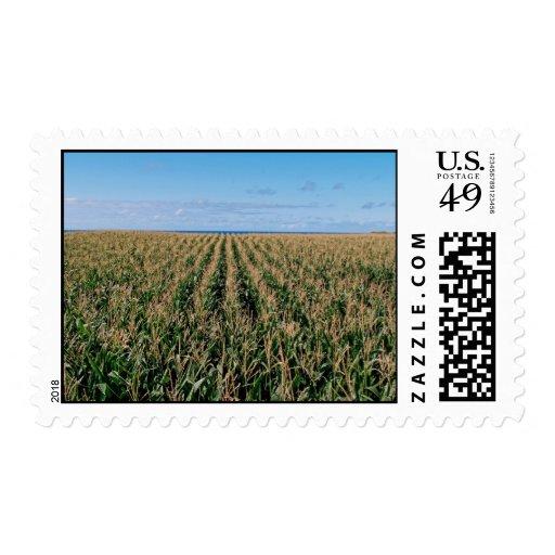 Campo de maíz sellos