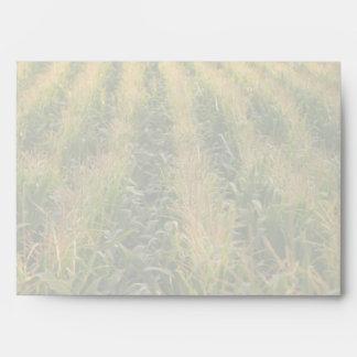 Campo de maíz sobre