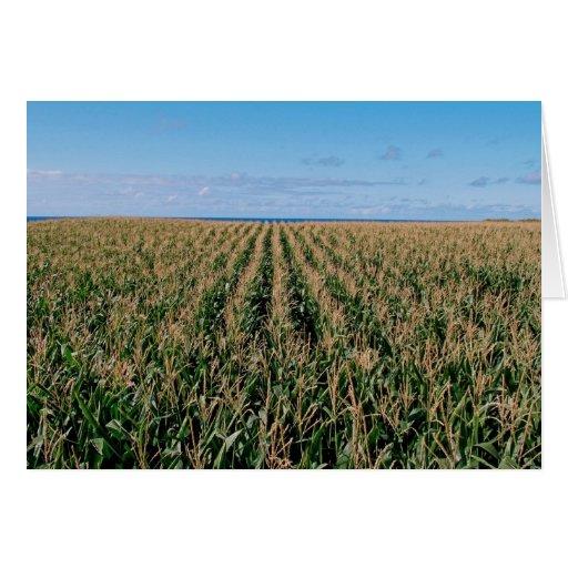 Campo de maíz tarjeta de felicitación