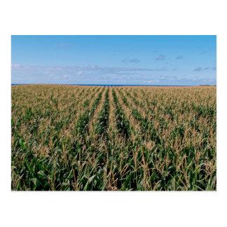 Campo de maíz tarjetas postales