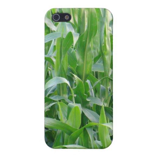 Campo de maíz verde - iPhone-funda iPhone 5 Carcasa