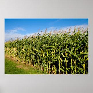 campo de maíz y cielo póster