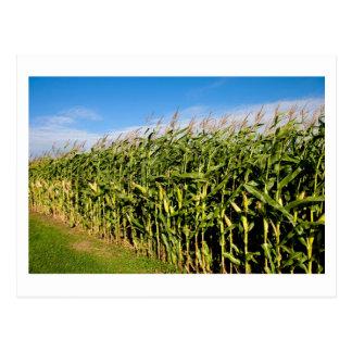 campo de maíz y cielo postales
