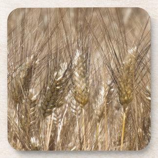 Campo de oídos del trigo posavasos de bebidas