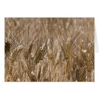 Campo de oídos del trigo tarjeta de felicitación