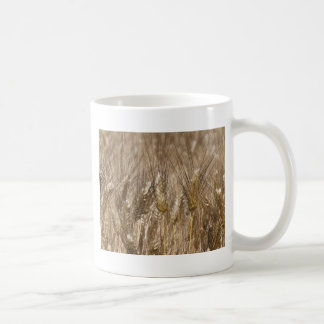 Campo de oídos del trigo taza de café