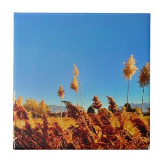Campo de oro del país, skys azules azulejo cuadrado pequeño