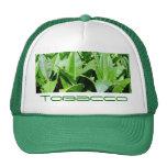 Campo de tabaco gorras
