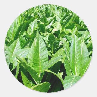 Campo de tabaco pegatina redonda