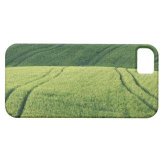 Campo de trigo con las pistas del neumático, iPhone 5 funda