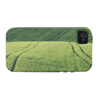 Campo de trigo con las pistas del neumático Pienz Vibe iPhone 4 Carcasas