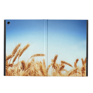 Campo de trigo contra el cielo azul