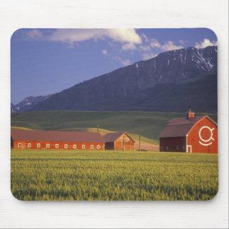Campo de trigo en el valle de Wallowa, apenas afue Alfombrillas De Ratón