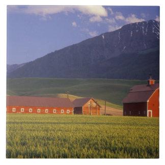 Campo de trigo en el valle de Wallowa, apenas afue Azulejo Cuadrado Grande