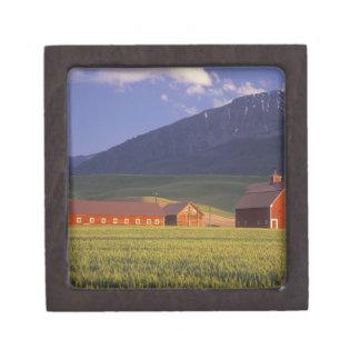 Campo de trigo en el valle de Wallowa, apenas afue Cajas De Regalo De Calidad