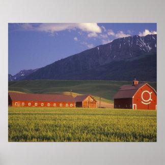 Campo de trigo en el valle de Wallowa, apenas afue Póster
