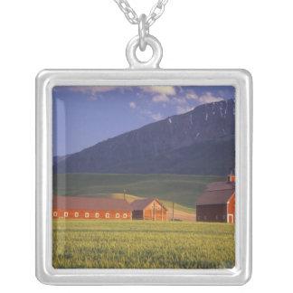 Campo de trigo en el valle de Wallowa, apenas Collar Plateado