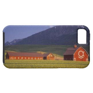 Campo de trigo en el valle de Wallowa, apenas Funda Para iPhone SE/5/5s