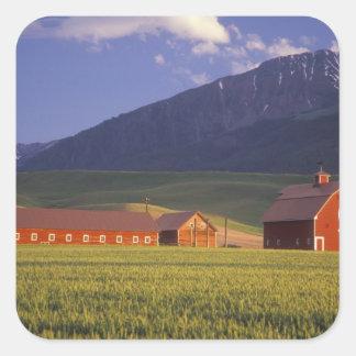 Campo de trigo en el valle de Wallowa, apenas Pegatina Cuadrada