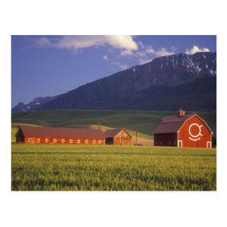 Campo de trigo en el valle de Wallowa, apenas Tarjeta Postal