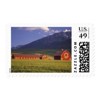 Campo de trigo en el valle de Wallowa, apenas Timbre Postal