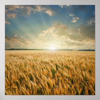 Campo de trigo en puesta del sol póster