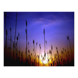 """Campo de trigo hermoso en la puesta del sol folleto 8.5"""" x 11"""""""