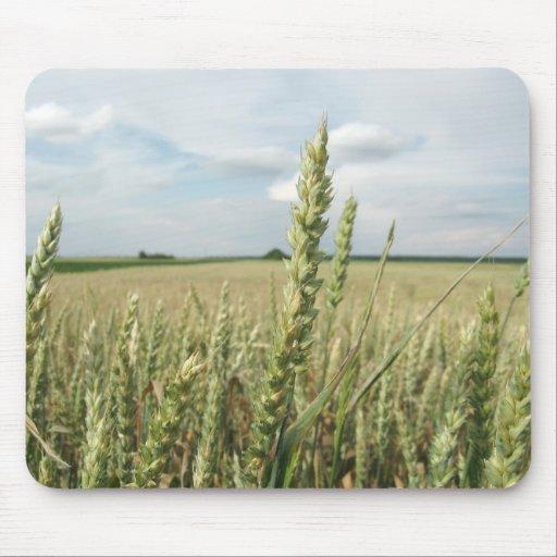 Campo de trigo joven verde tapete de raton