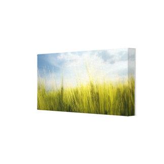 campo de trigo impresión de lienzo