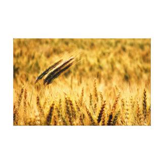 Campo de trigo impresión en lienzo estirada