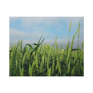 Campo de trigo lienzo envuelto para galerías