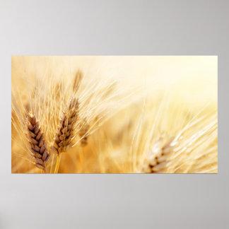 Campo de trigo impresiones