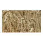 Campo de trigo tarjeta de visita